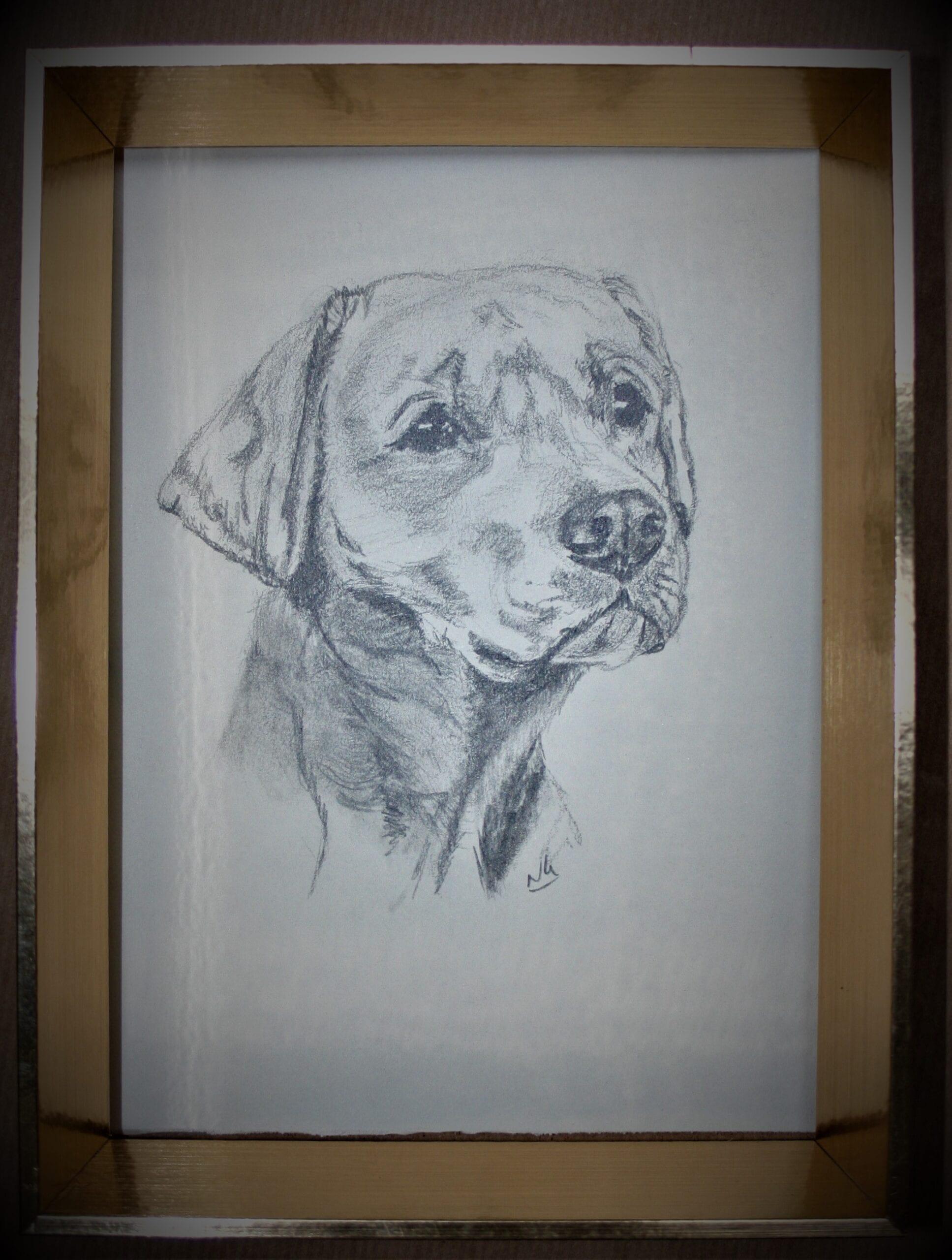 Labrador pup